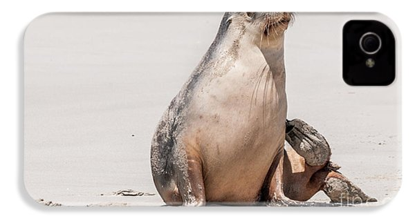 Sea Lion 1 IPhone 4 Case by Werner Padarin