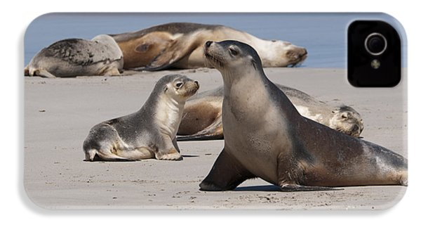 IPhone 4 Case featuring the photograph Sea Lions by Werner Padarin