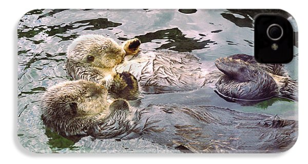 Sea Otters Holding Hands IPhone 4 Case by BuffaloWorks Photography