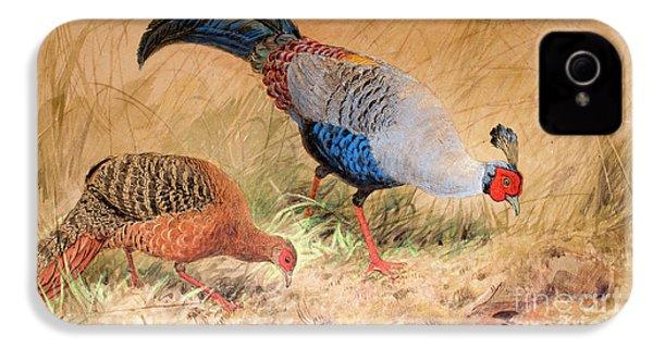 Siamese Pheasant  IPhone 4 Case