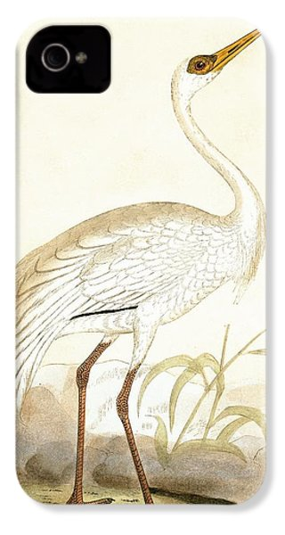 Siberian Crane IPhone 4 Case by English School