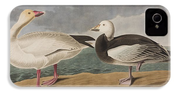 Snow Goose IPhone 4 Case by John James Audubon