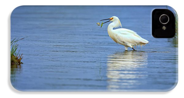 Snowy Egret At Dinner IPhone 4 Case by Rick Berk