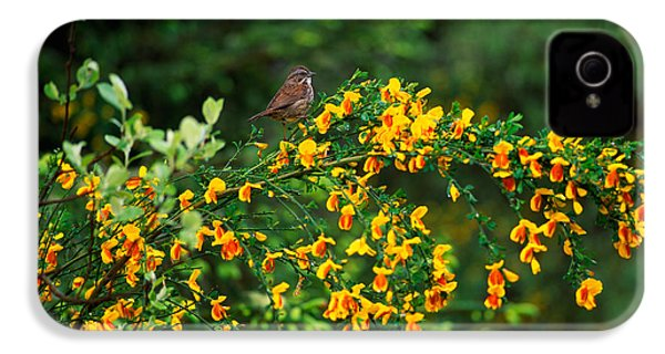 Song Sparrow Bird On Blooming Scotch IPhone 4 Case by Panoramic Images