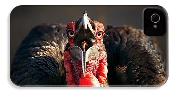 Southern Ground Hornbill Swallowing A Seed IPhone 4 Case by Johan Swanepoel