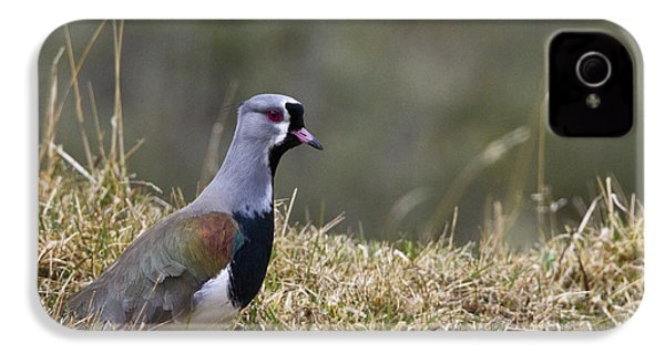 Southern Lapwing IPhone 4 Case by Jean-Louis Klein & Marie-Luce Hubert