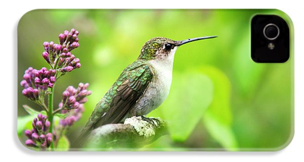 Spring Beauty Ruby Throat Hummingbird IPhone 4 / 4s Case by Christina Rollo