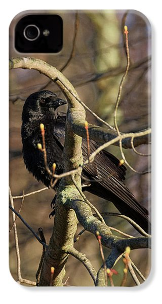 IPhone 4 Case featuring the photograph Springtime Crow by Bill Wakeley