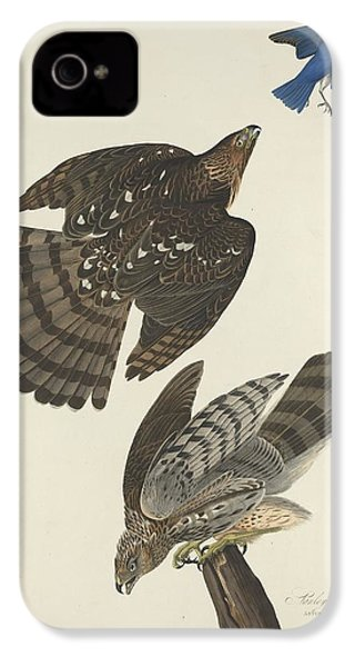 Stanley Hawk IPhone 4 Case by Dreyer Wildlife Print Collections