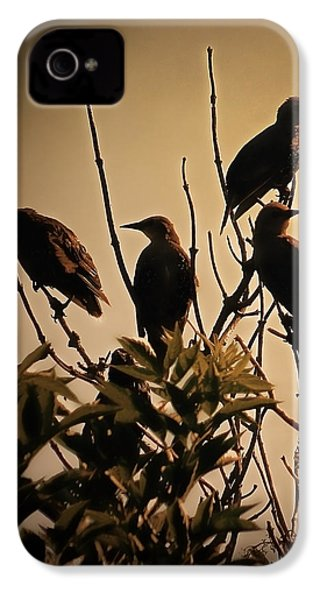 Starlings IPhone 4 / 4s Case by Sharon Lisa Clarke