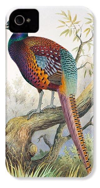 Strauchs Pheasant IPhone 4 Case