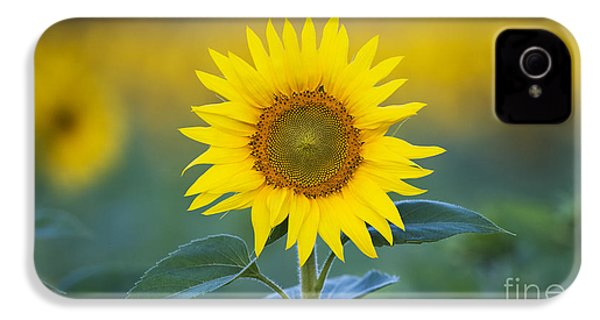 Sunflower IPhone 4 / 4s Case by Tim Gainey