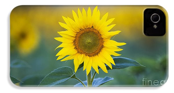 Sunflower IPhone 4 Case by Tim Gainey