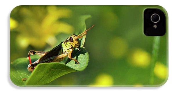Green Grasshopper IPhone 4 Case by Christina Rollo