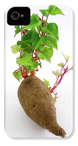 Sweet Potato IPhone 4 / 4s Case by Gaspar Avila