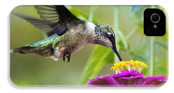 Sweet Success Hummingbird Square IPhone 4 Case by Christina Rollo