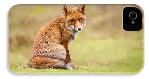 That Look - Red Fox Male IPhone 4 Case