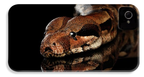 The Boa Constrictors, Isolated On Black Background IPhone 4 Case