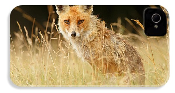 The Catcher In The Grass - Wild Red Fox IPhone 4 Case