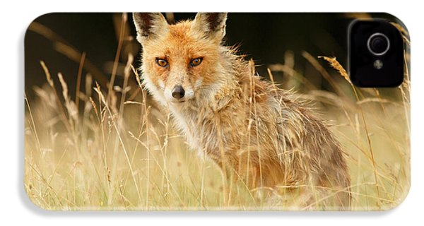 The Catcher In The Grass - Wild Red Fox IPhone 4 / 4s Case by Roeselien Raimond