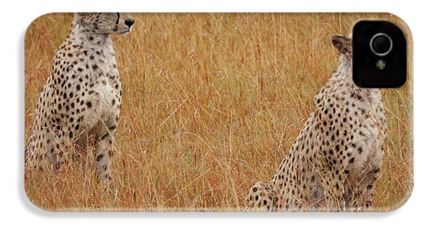The Cheetahs IPhone 4 Case by Nichola Denny