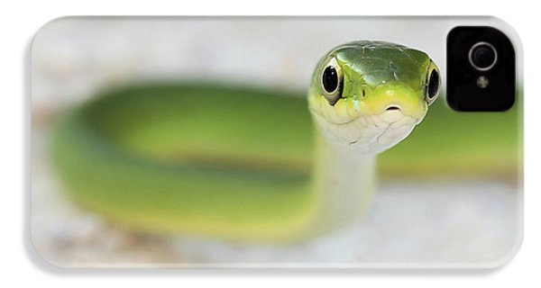The Cute Green Snake IPhone 4 Case by JC Findley