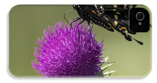 The Eastern Black Swallowtail  IPhone 4 Case by Ricky L Jones