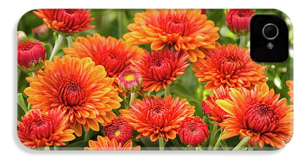 IPhone 4 Case featuring the photograph The Fall Bloom by Bill Pevlor