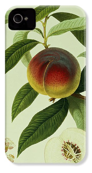 The Galande Peach IPhone 4 Case by William Hooker