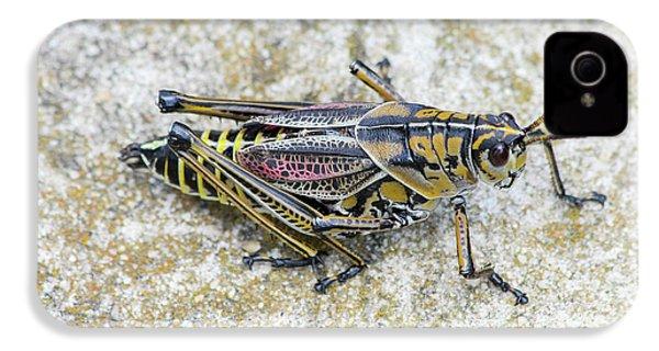 The Hopper Grasshopper Art IPhone 4 Case by Reid Callaway