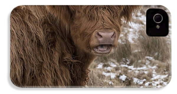 The Laughing Cow, Scottish Version IPhone 4 Case by Jeremy Lavender Photography