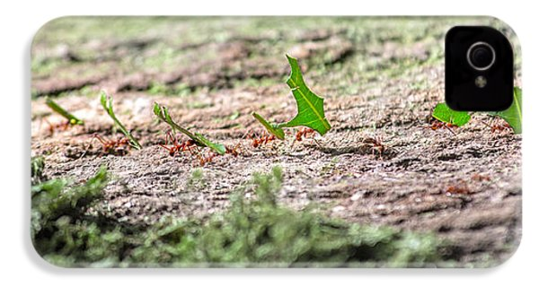 The Leaf Parade  IPhone 4 Case by Betsy Knapp