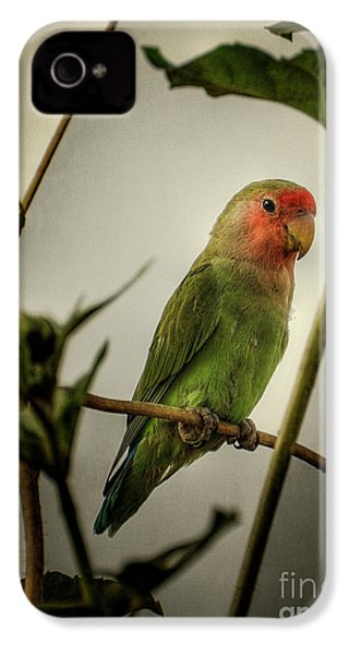 The Lovebird  IPhone 4 Case by Saija  Lehtonen