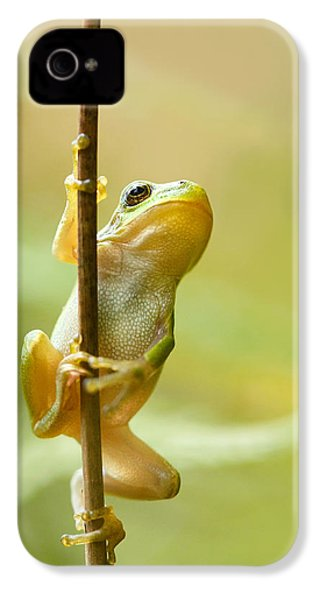 The Pole Dancer - Climbing Tree Frog  IPhone 4 Case by Roeselien Raimond