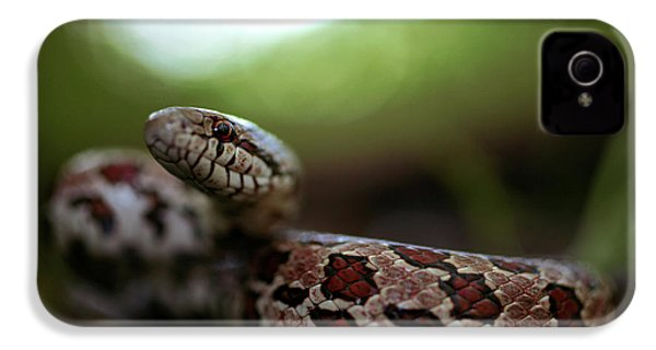 The Prairie Kingsnake IPhone 4 Case by Kyle Findley