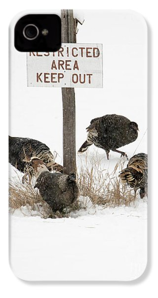 The Turkey Patrol IPhone 4 / 4s Case by Mike Dawson