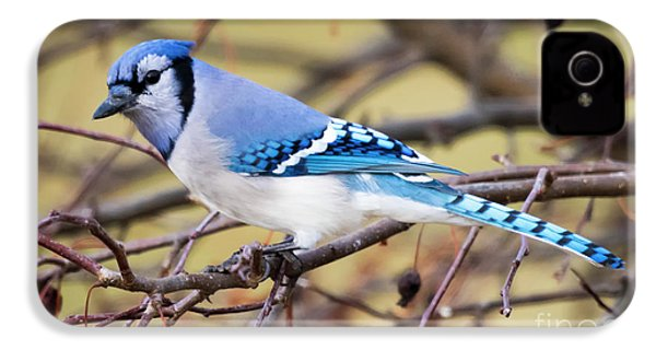 The Winter Blue Jay  IPhone 4 Case by Ricky L Jones