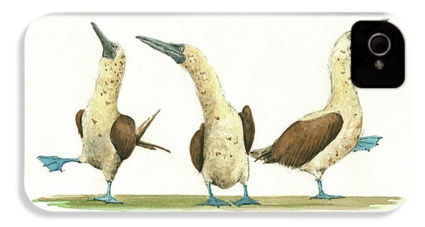 Three Blue Footed Boobies IPhone 4 Case