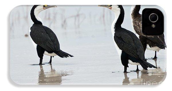 Three Cormorants IPhone 4 Case by Werner Padarin