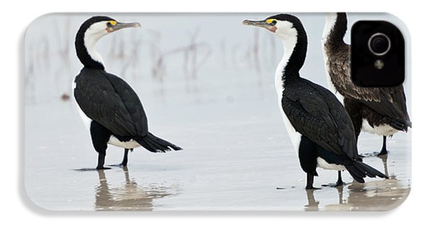 IPhone 4 Case featuring the photograph Three Cormorants by Werner Padarin