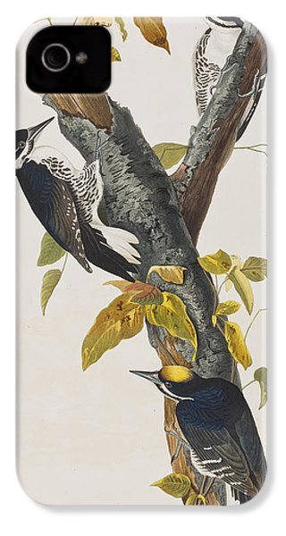 Three Toed Woodpecker IPhone 4 Case by John James Audubon