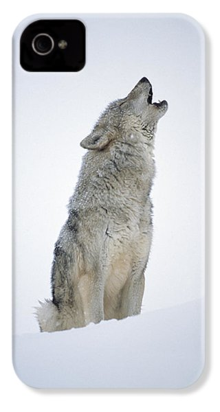Timber Wolf Portrait Howling In Snow IPhone 4 Case
