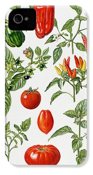 Tomatoes And Related Vegetables IPhone 4 / 4s Case by Elizabeth Rice