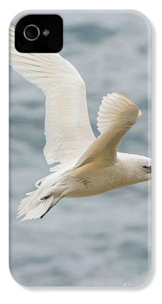 Tropic Bird 2 IPhone 4 Case by Werner Padarin