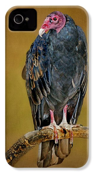 Turkey Vulture IPhone 4 / 4s Case by Nikolyn McDonald