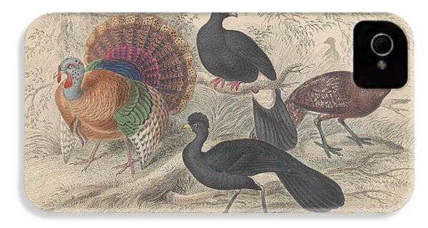 Turkeys IPhone 4 / 4s Case by Anton Oreshkin