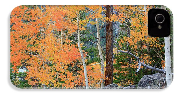 Twisted Pine IPhone 4 Case by David Chandler