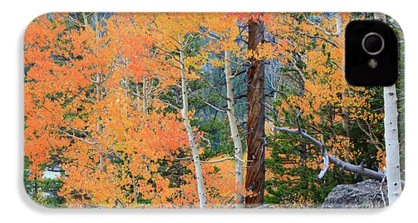 IPhone 4 Case featuring the photograph Twisted Pine by David Chandler