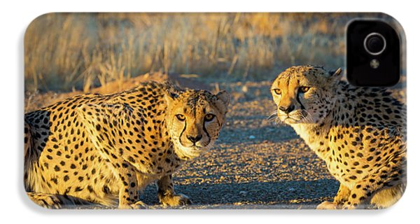 Two Cheetahs IPhone 4 Case by Inge Johnsson