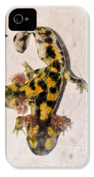 Two-headed Near Eastern Fire Salamande IPhone 4 Case by Shay Levy